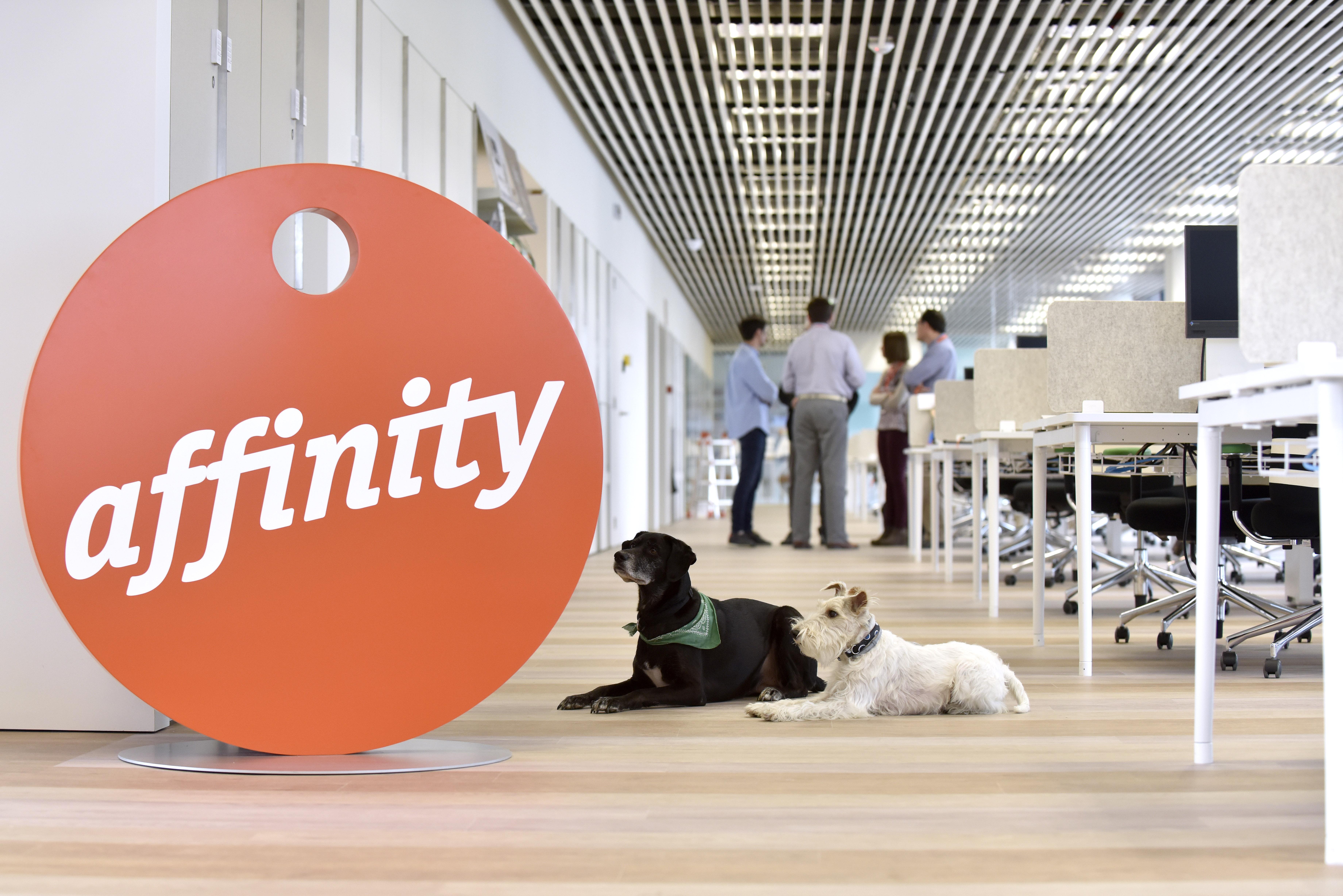 Perros en las oficinas de affinity