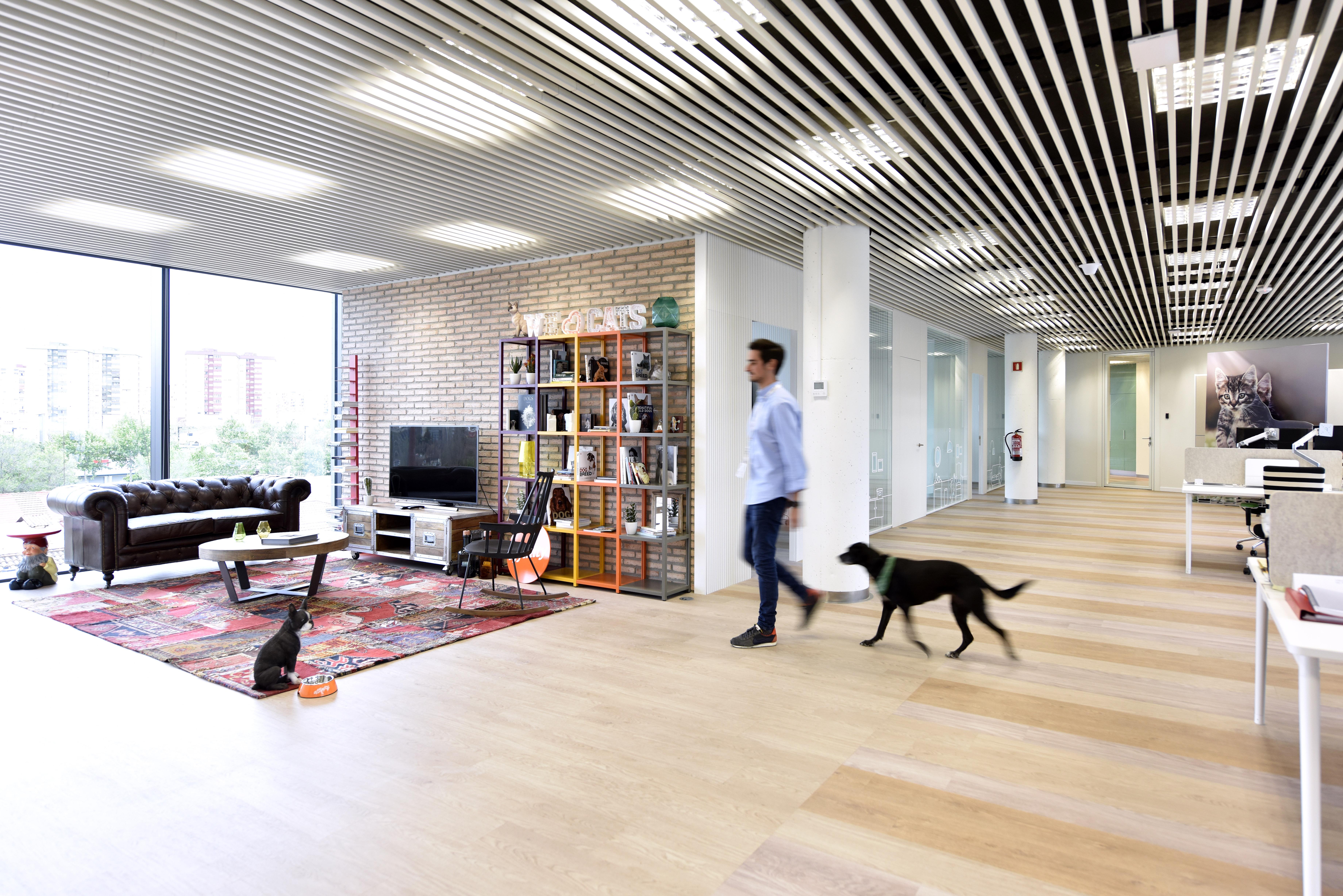 Espacio loft en oficinas affinity con perro